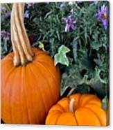 Time For Pumpkins In The Flower Beds Canvas Print