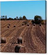 Time To Bale In Color Canvas Print