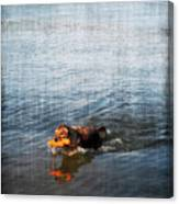 Time To Fetch Canvas Print