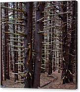Timeless Forest Canvas Print