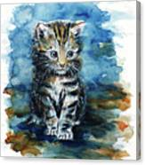 Timid Kitten Canvas Print