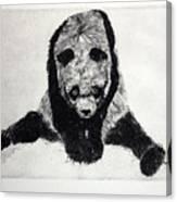 Timido Panda Canvas Print