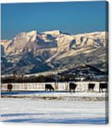 Timpanogos From The North Fields Canvas Print