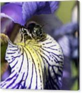 Tiny Bee Canvas Print