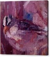 Tiny Bird Study #1 Canvas Print