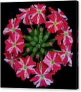 Tiny Bunch Of Red And Pink Flowers Canvas Print