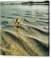 Tiny Crab In Water Canvas Print