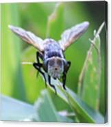 Tiny Fly Canvas Print