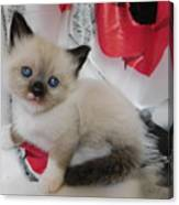 Tiny Micro Version Of Red White And Ragdoll Kitty Kitten Baby Cat Silktapestrykittenstm Canvas Print
