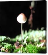 Tiny Mushroom 2 Canvas Print