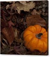 Tiny Pumpkin Canvas Print