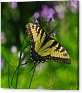 Tiny Wings Canvas Print