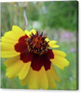 Tiny Yellow Flower Canvas Print