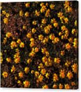 Tiny Yellow Flowrers On The Desert Floor Canvas Print