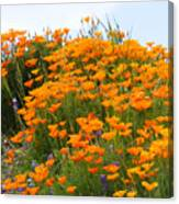 Tip Of Poppy Hill Canvas Print
