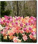 Tiptoe Among The Tulips Canvas Print