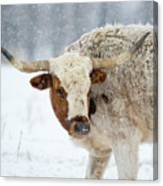 Tired Of Snow Canvas Print