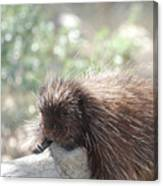 Tired Porcupine On A Fallen Log Canvas Print
