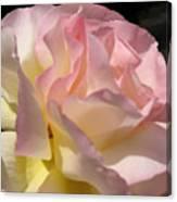 Tissue Paper Rose Canvas Print