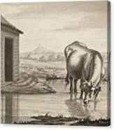 Title A Cow Standing In A Pool Beside  Canvas Print