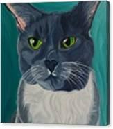 Titter, Cat Portrait Canvas Print