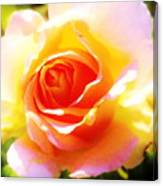 Tjs Rose A Glow Canvas Print
