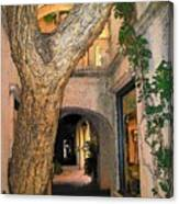 Tlaquepaque Village Tree   Canvas Print