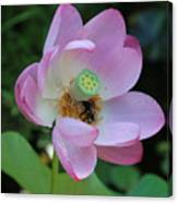 To Bee A Flower Canvas Print