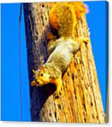 To Squirrels And To Me Canvas Print