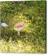 Toadstool Grows On A Forest Floor. Canvas Print