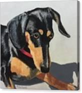 Toby Sits Still Canvas Print