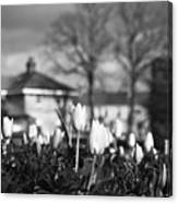 Together Bw Canvas Print