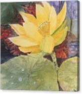 Tohopekaliga Lotus 2 Canvas Print