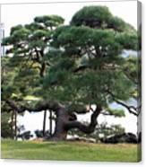 Tokyo Tree Canvas Print