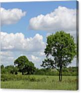 Tolworth Court Nature Reserve In Surrey Canvas Print