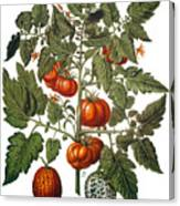 Tomato & Watermelon 1613 Canvas Print