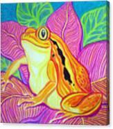 Tomatoe Frog Canvas Print
