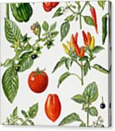 Tomatoes And Related Vegetables Canvas Print