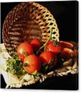 Tomatos. Out Of Basket. Canvas Print