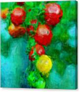 Tomatos Canvas Print