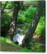Toms Creek In Summer 3 Canvas Print