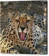 Tongue And Cheek Cheetah Canvas Print