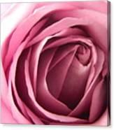Toni's Rose  Canvas Print