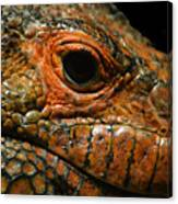 Too Close For Comfort Canvas Print