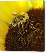 Too Much Pollen Canvas Print