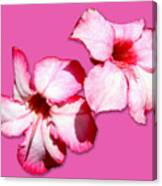 Too Pink Canvas Print