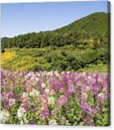 Toong Bua Tong Forest Park Canvas Print