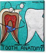 Tooth Anatomy Canvas Print