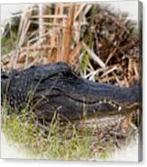 Alligator Toothy Grin 2 Canvas Print