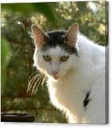 Top Cat Of The Ranch Canvas Print
